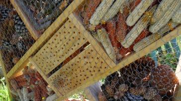 Hôtel à insectes (2)